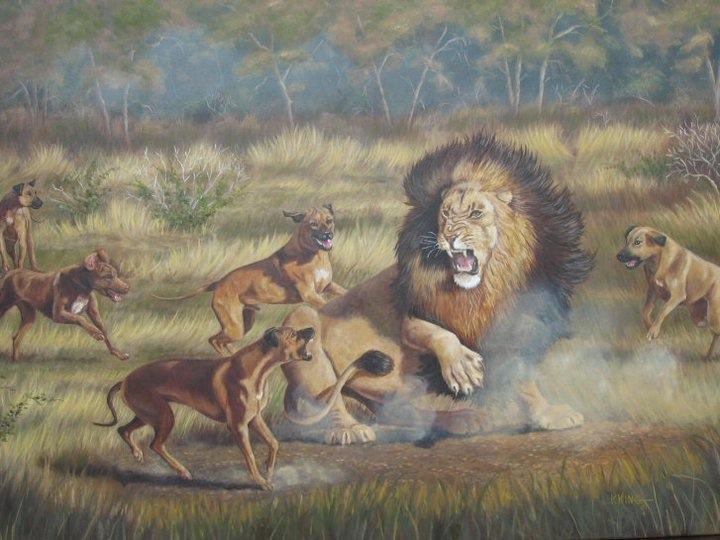 Rhodesian Ridgeback KennelRhodesian Ridgeback Lion Hunting Video